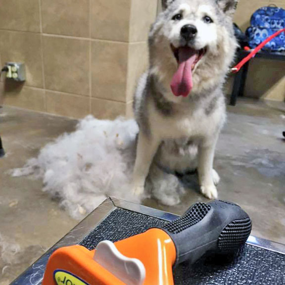 Grooming and pet washes pet food center loving care and attention to grooming solutioingenieria Choice Image